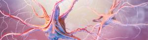 grooa_neuroscience